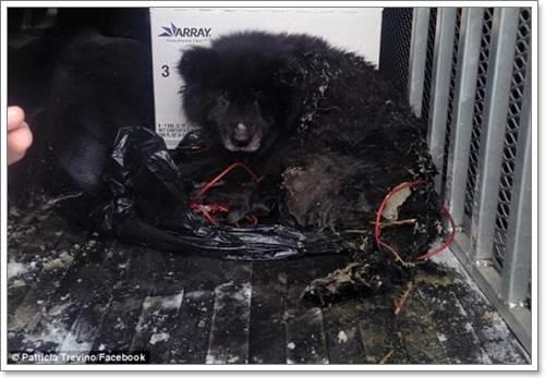 Dogilike.com :: รอดหวิด! พลเมืองดีช่วยสุนัข หลังพบเท้าติดอยู่บนพื้นหิมะ