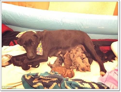 Dogilike.com :: สุนัขจรจัดฮีโรเห่าเรียกคน นำทางช่วยเพื่อนสุนัขและลูก ๆ 10 ตัว