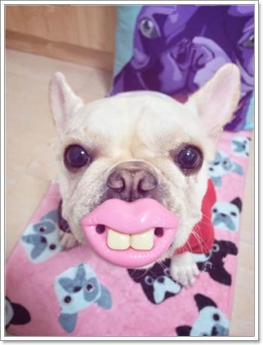 Dogilike.com :: 18 ของเล่นสุนัขสุดแนวที่คนรักสุนัขเห็นแล้วต้องฮา
