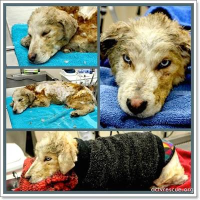 Dogilike.com :: ช็อค! พลเมืองดีพบลูกสุนัขถูกไฟเผา ร้องครวญครางในถังขยะ