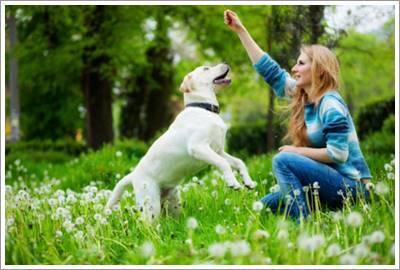 Dogilike.com :: เคลียร์ชัด ๆ น้องหมากินอาหารแบบไม่ปรุงรส อร่อยจริงหรือ?