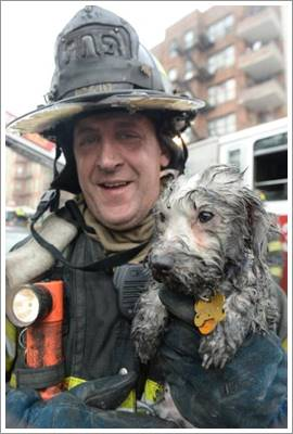 Dogilike.com :: เจ้าของปล่อยโฮ! หลังสุนัขสุดรักรอดตายจากบ้านไฟไหม้