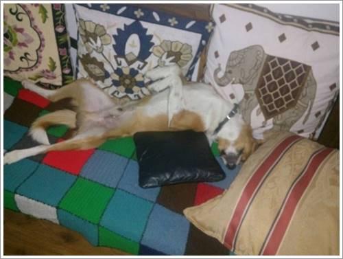 Dogilike.com :: ซึ้ง! สุนัขซื่อสัตย์วิ่งไกล 37 ไมล์กลับไปหาเจ้าของที่โรงพยาบาล
