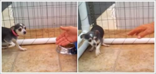 Dogilike.com :: ภาพประทับใจ! เมื่ออดีตสุนัขจากโรงงานผลิตลูกสุนัขได้รับอ้อมกอดอบอุ่นเป็นครั้งแรก