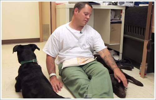 Dogilike.com :: น้ำตาซึม! ภาพการบอกลาครั้งสุดท้ายของชายนักโทษและสุนัขจากบ่อนพนันสุนัข (มีคลิป)