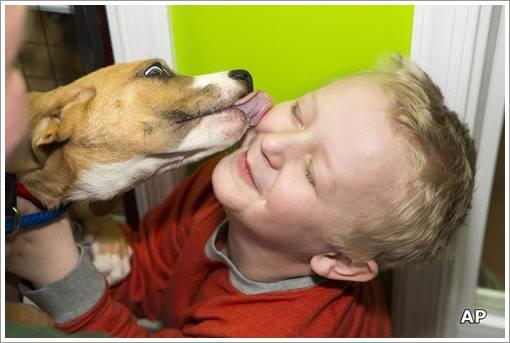 Dogilike.com :: ผลวิจัยเผย สาเหตุที่คนทนสายตาเว้าวอนของเจ้าตูบไม่ได้