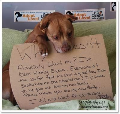 Dogilike.com :: ภาพเปลี่ยนชีวิต! พิทบูลฯ ถูกรับเลี้ยงหลังอยู่ในศูนย์พักพิงสัตว์นาน 5 ปี