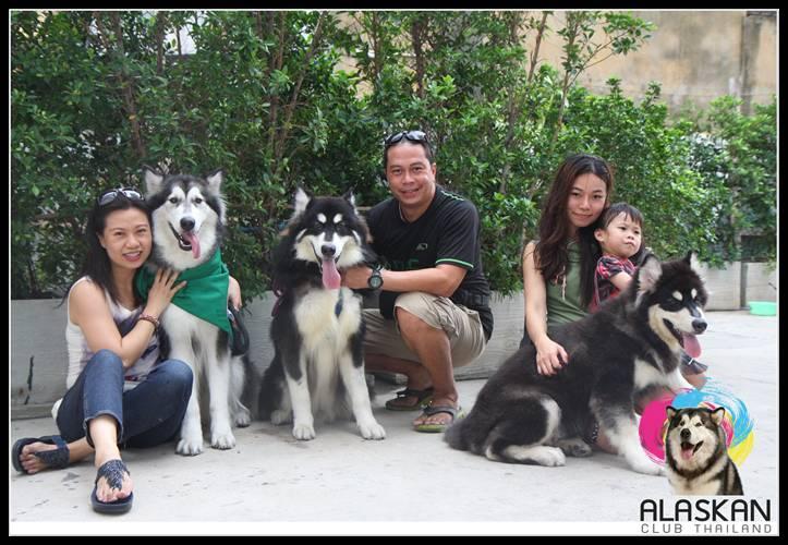 Dogilike.com :: ประมวลภาพกิจกรรม Alaskan Club Thaialnd Selfie .. เพราะคิดถึงกัน