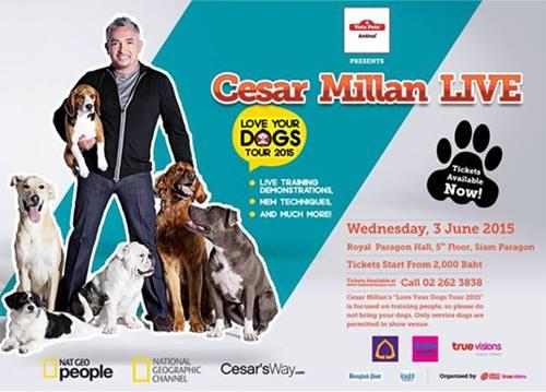 Dogilike.com :: �ซีซาร์ มิลลาน� เตรียมโชว์สดครั้งแรกในไทยกับ Vetz Petz Antinol Presents Cesar Millan LIVE � Love Your Dogs Tour