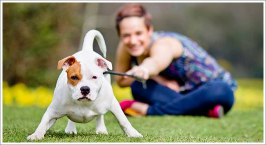 Dogilike.com :: รักต้องรู้! คู่มือการออกกำลังกายสำหรับสุนัข(ฉบับสมบูรณ์)