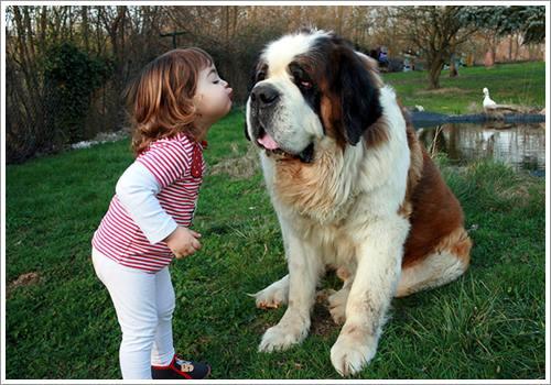 Dogilike.com :: 30 ภาพน่าเอ็นดู เมื่อเด็กน้อยมีเพื่อนรักเป็นน้องหมาตัวโต