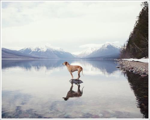 Dogilike.com :: Maddie น้องหมานักทรงตัวชื่อก้องกับการผจญภัยครั้งใหม่ทั่วอเมริกา