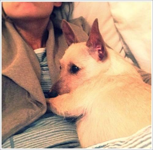 Dogilike.com :: 17 ภาพสุดน่ารัก เมื่อน้องหมาเห็นเจ้านายเป็นหมอนหนุน