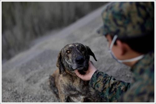 Dogilike.com :: มิตรภาพซึ้ง! เมื่อทีมกู้ภัยพบเจ้าตูบในพื้นที่ภูเขาไฟระเบิดประเทศชิลี