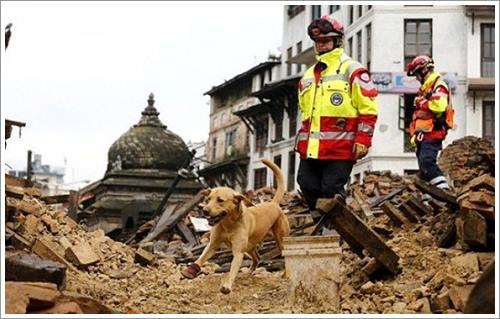 Dogilike.com :: ยอดฮีโร! ทีมสุนัขกู้ภัยลงพื้นที่ค้นหาผู้ประสบภัยแผ่นดินไหวในเนปาล
