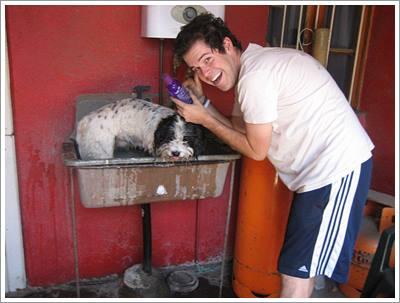 Dogilike.com :: 7 เทคนิคแปลงโฉมหมาจรให้กลายเป็นน้องหมาคุณหนูสุดน่ารัก!