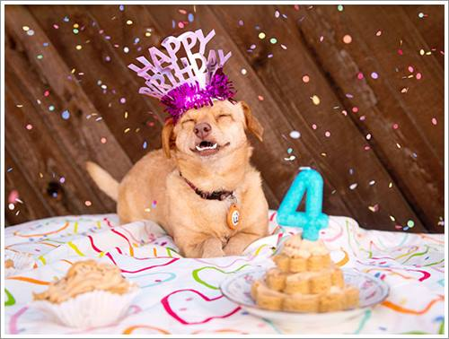 Dogilike.com :: Daisy ตูบวีลแชร์ผู้สร้างรอยยิ้มและเปลี่ยนคนทั่วโลกให้เอ็นดูสุนัขพิการ