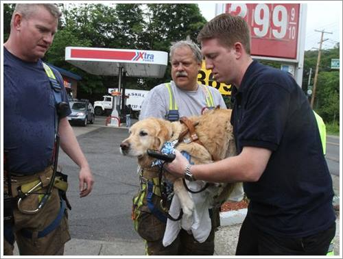 Dogilike.com :: สุดยอดฮีโร! โกลเด้นฯ กระโดดขวางรถบัสช่วยชีวิตหญิงตาบอด