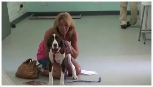 Dogilike.com :: คลิปซึ้ง! เจ้าของปล่อยโฮ เมื่อเห็นสุนัขอัมพาตกลับมาเดินได้อีกครั้ง