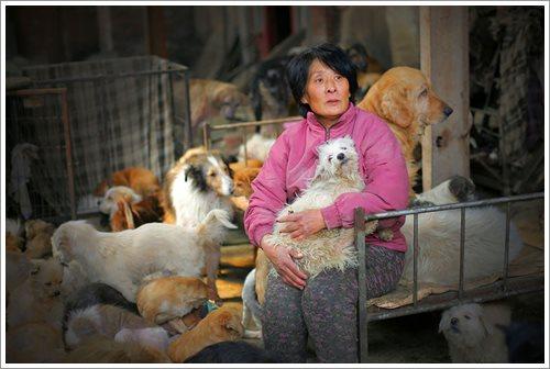 Dogilike.com :: หญิงจีนใจบุญตระเวนซื้อชีวิตสุนัข 100 ตัว ก่อนถูกสังเวยเทศกาลกินเนื้อหมา