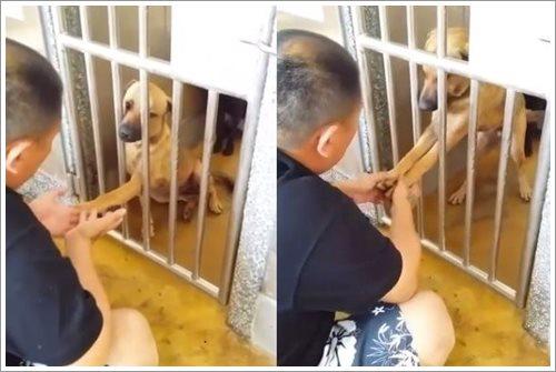 Dogilike.com :: สุดสงสาร! สุนัขในจีนยื่นอุ้งเท้าพร้อมส่งเสียงร้องให้คนช่วยพากลับบ้าน