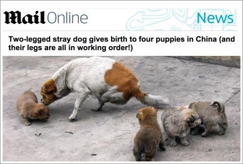 Dogilike.com :: ชีวิตใหม่! สุนัขจรจัดแม่ลูกอ่อนพิการขาหลัง ได้รับการช่วยเหลือแล้ว