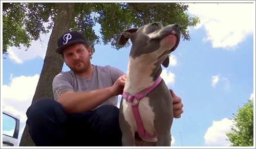 Dogilike.com :: คลิป หนุ่มมะกันปฏิเสธขายยาให้หญิงใจโหด หลังจะซื้อไปฆ่าสุนัขจรจัด