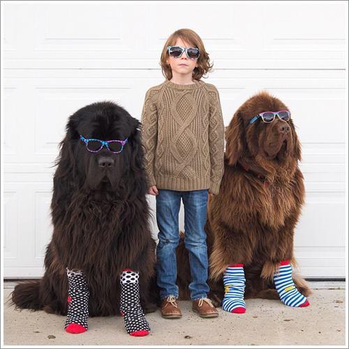 Dogilike.com :: 16 ภาพน่ารัก เมื่อคุณแม่จับลูกชายถ่ายภาพกับ 2 เจ้าตูบไซส์ยักษ์