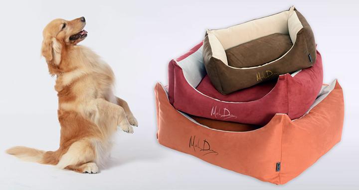 Dogilike.com :: เชิญร่วมซื้อสลากการกุศลช่วยสุนัขจร จ.อ่างทอง กับโครงการพี่ดีโด้ช่วยเพื่อน