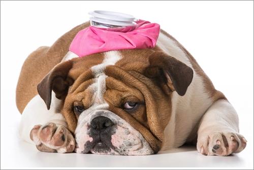 Dogilike.com :: ดูแลลูกสุนัขให้ห่างไกลโรคลำไส้อักเสบติดต่อ