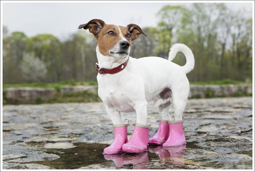 Dogilike.com :: เลี้ยงเจ้าตูบอย่างไร ไม่ให้ฝืนสัญชาตญาณสุนัข !