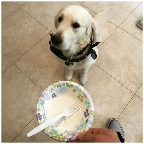 """Dogilike.com :: 13 ภาพสุดฮา เมื่อเจ้าของบอกว่า """"ไม่"""" แต่ตูบบอกว่าแบบนี้ล่ะ """"ใช่เลย"""""""