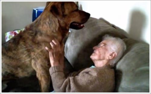 Dogilike.com :: คลิปประทับใจ! เมื่อเจ้าตูบขี้อ้อนคอยอยู่เคียงข้างดูแลคุณยายสุดที่รัก