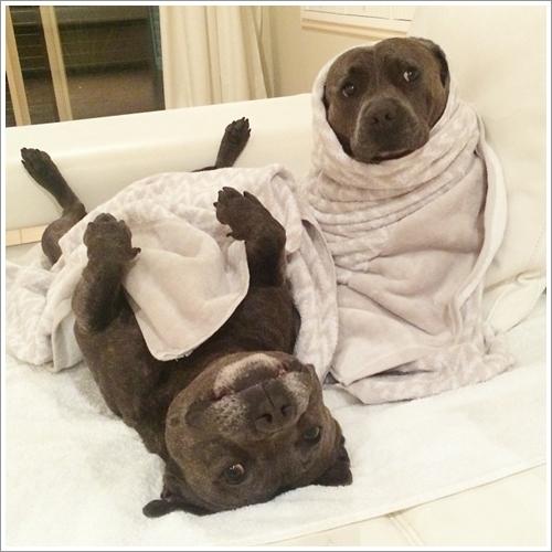 Dogilike.com :: 15 ภาพสุดแบ๊วของสองเจ้าตูบ ที่ใครเห็นก็ต้องตกหลุมรัก !