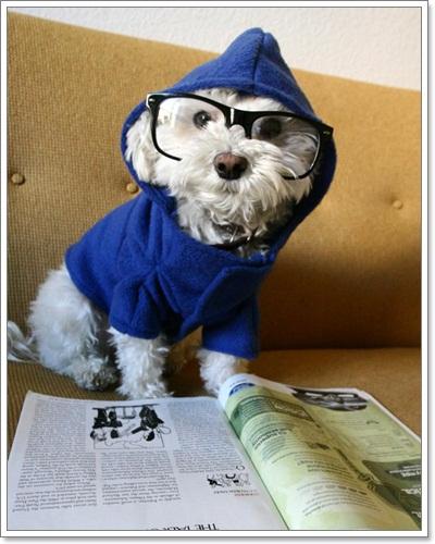 Dogilike.com :: รวมภาพน้องหมาแว่นฮิปสเตอร์สุดๆ!!