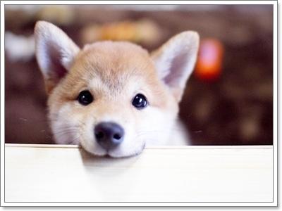 Dogilike.com :: юр╬╧Им╖кар╧Хр╗ьЙ╨