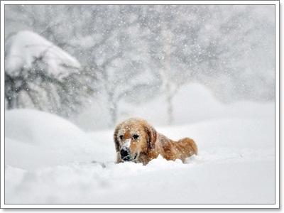 Dogilike.com ::  รวมภาพน้องหมาวิ่งเล่นหิมะ