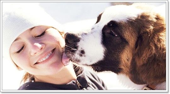 Dogilike.com :: รวมภาพสุดน่ารัก ... เมื่อน้องหมาอยากมุ้งมิ้งกับเจ้าของ