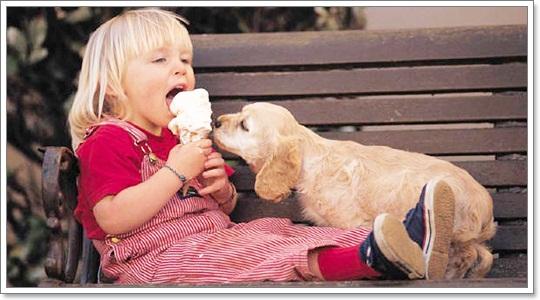 Dogilike.com :: ภาพน่ารักๆ เมื่อน้องหมาหม่ำไอศครีม