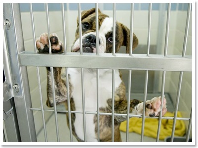 Dogilike.com :: รวมภาพน้องหมาน่ารักจากศูนย์พักพิง
