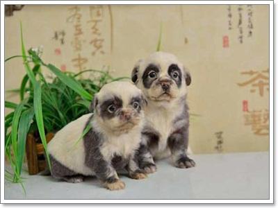 Dogilike.com :: รวมภาพน้อหมาลายแปลก !!!