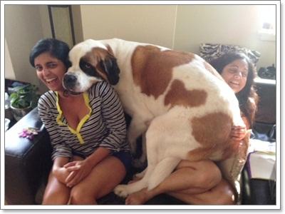 Dogilike.com :: รวมภาพสุดน่ารักของ น้องหมาขี้อ้อน