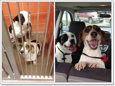 Dogilike.com :: เมื่อน้องหมาจากศูนย์พักพิงถูกรับไปเลี้ยง จะเป็นอย่างไร ไปติดตามกัน!