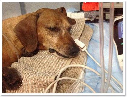 Dogilike.com :: ธาตุเหล็ก...เรื่อง(ไม่)เล็กที่คนรักสุนัขต้องรู้