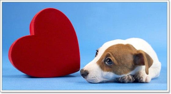 Dogilike.com :: 5 โรคหัวใจพิการแต่กำเนิดที่เกิดได้ในสุนัข