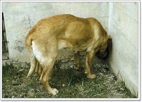 Dogilike.com :: ประเด็นสุขภาพของน้องหมาที่แชร์กันสนั่นโซเชียลในปี 2015