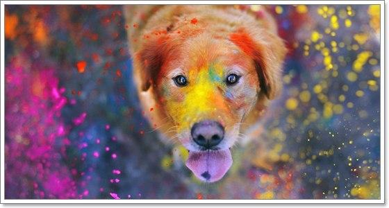 Dogilike.com :: ระวัง!! พิษโลหะหนักที่ผสมมากับสี ทำอันตรายกับน้องหมาได้