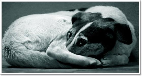 Dogilike.com :: ชีวิตสุดอาภัพ!! 8 โรคร้ายที่หมาข้างถนนต้องเผชิญ (ตอนที่1)