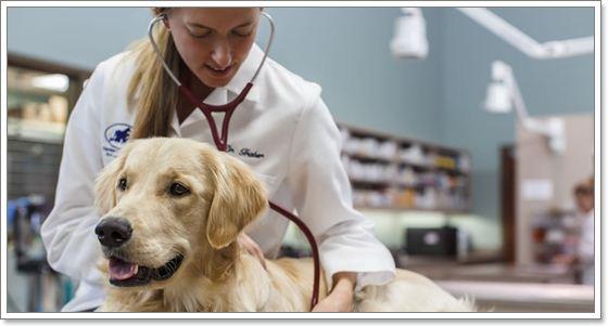 Dogilike.com :: สังเกตอย่างไร ว่าน้องหมาของเราเป็นเนื้องอกที่เต้านม