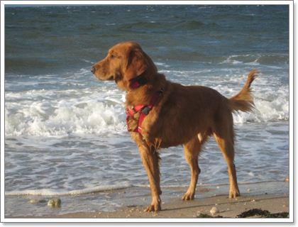 Dogilike.com :: มะเร็งกระดูก โรคร้ายที่ผู้เลี้ยงสุนัขพันธุ์ใหญ่ยักษ์ต้องรู้!!!
